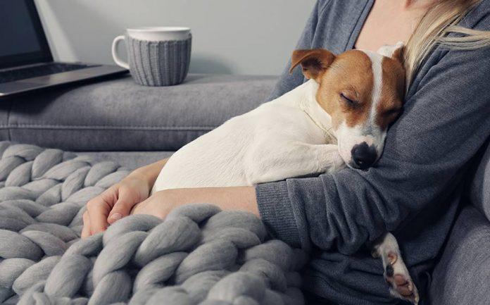 terapia com animais de estimação